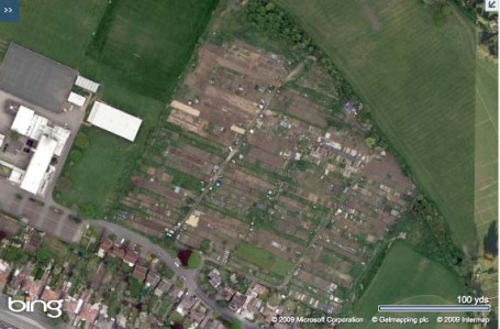 the whole site - over 100 plots