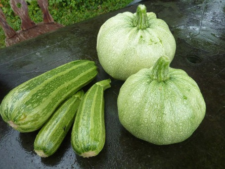 courgettes - round and straight