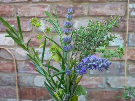 rosemary, marjoram, thyme, lavender