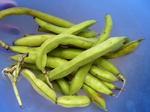 Mary's broad beans