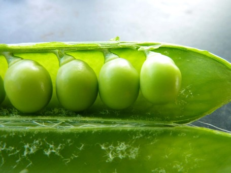 Peas_close up