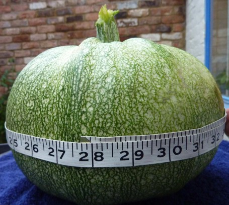 Courgette - round measured