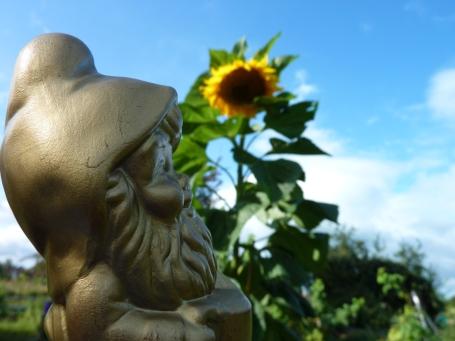 Bilbo with sunflower*
