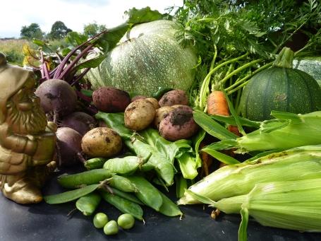 Bilbo's harvest Sat*