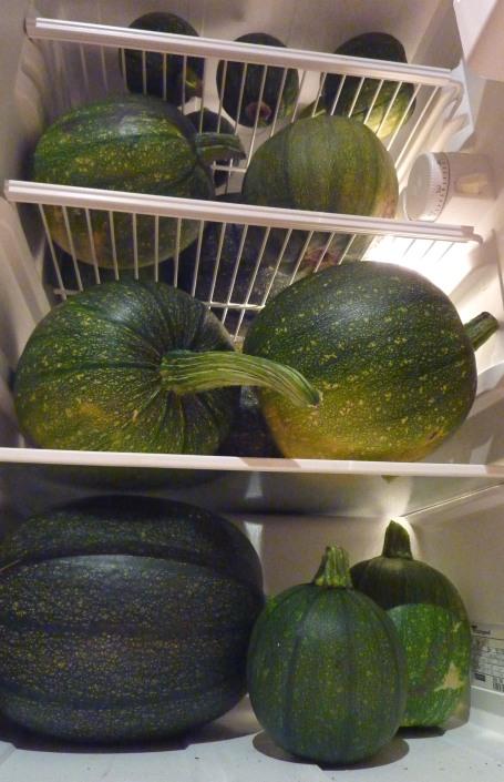 fridge full of pumpkins