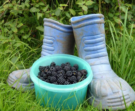 Hedgerow jelly_blackberries picked + wellies