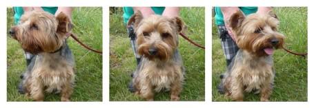 MOSAIC - Billy allotment dog