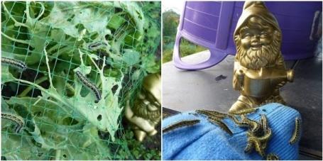 MOSAIC - caterpillars