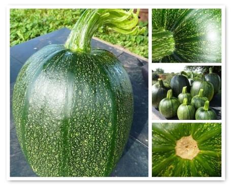 MOSAIC - pumpkins