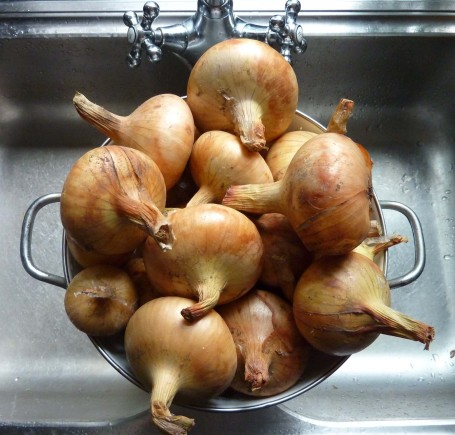 Onions - dried out