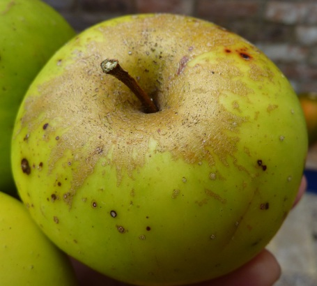Derek's apple close up