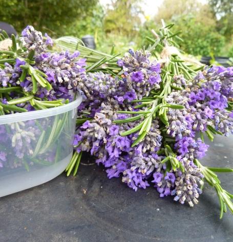 lavender posies on table