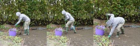 MOSAIC - Nic digging