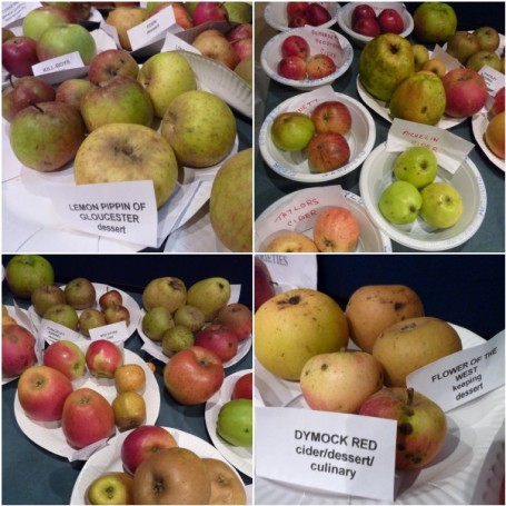 MOSAIC_Glos apple varieties