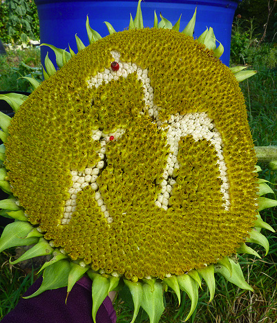 sunflower giraffe family copy