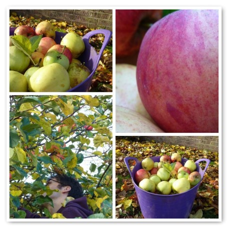 MOSAIC_apple picking