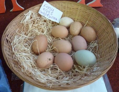 2-2-13 - Farm Park_eggs 4B