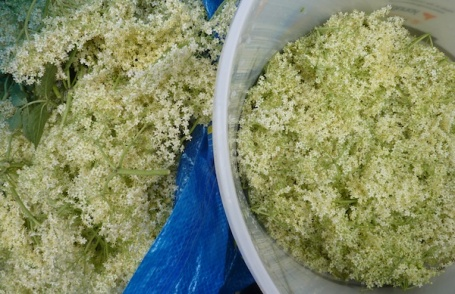21-6-13 - elderflower cordial_bag to bucket 4B