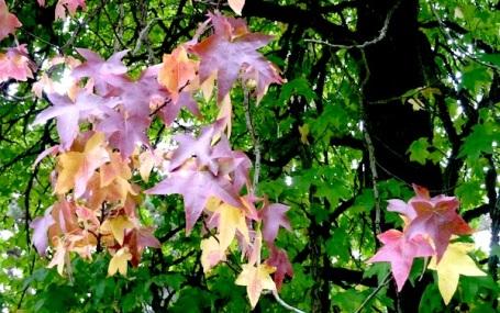 26-9-13 - autumn_1 leaves 4B