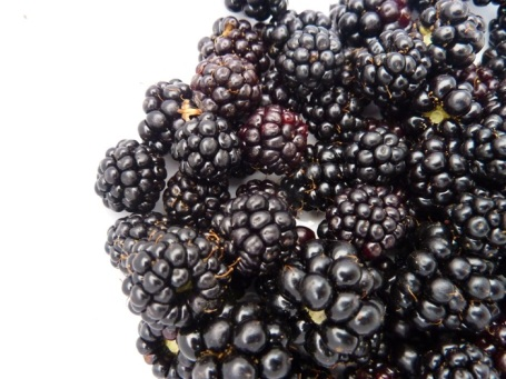 23-8-14 - Oxo bowl_blackberries