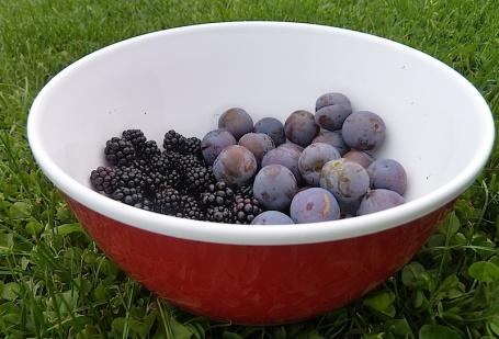 23-8-14 - Oxo bowl_damsons and blackberries 4B