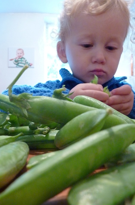 23-8-14 - Oxo bowl_shelling peas 4B