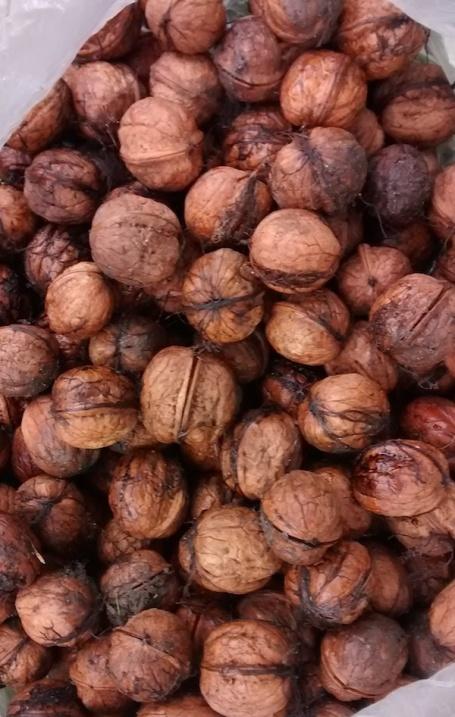 walnuts 4B