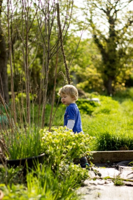 allotment gardening with kids_toddler wandering
