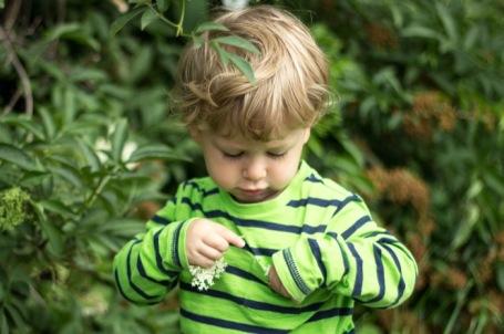 #30dayswild - day 13 elderflower picking