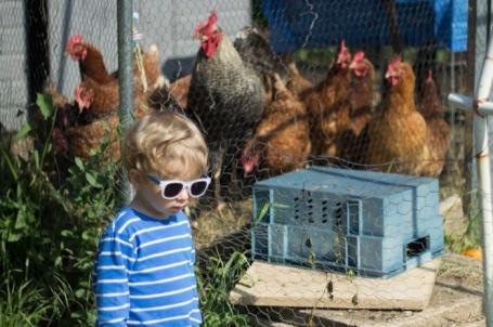 allotment chickens - nipitinthebud.co.uk-3