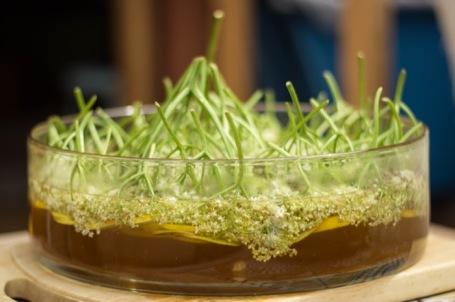 elderflower cordial making - nipitinthebud.co.uk