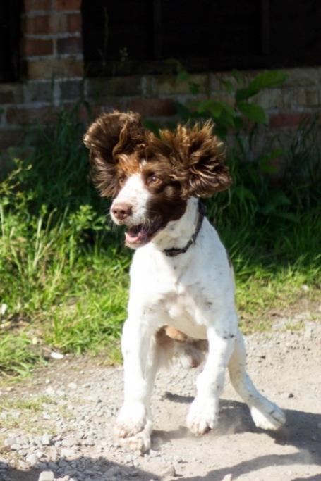 excited dog at the allotment - nipitinthebud.co.uk-1