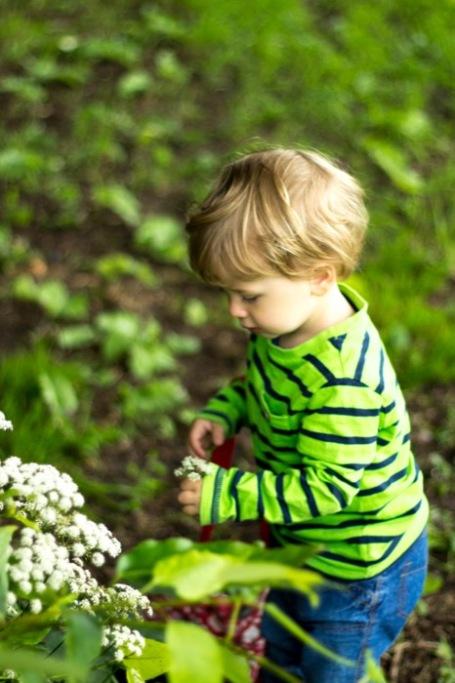 Toddler picking elderflower - nipitinthebud.co.uk