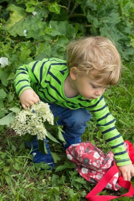 Toddler picking elderflower for cordial - nipitinthebud.co.uk