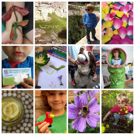 #30dayswild collage - nipitinthebud.co.uk